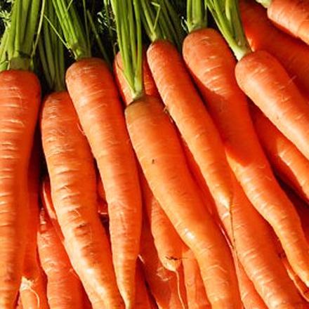 co2-extract-wortel-biologisch.jpg