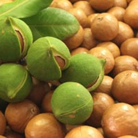 olie-macadamia-biologisch.jpg