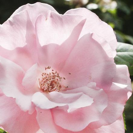 roos-aromatisch-water.jpg